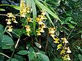 2012 kveten botanicka zahrada 084.jpg