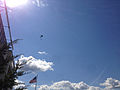 2014-08-24 15 05 24 Skydivers parachuting to the ground at Pennridge Airport in East Rockhill Township, Pennsylvania.JPG