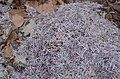 2014. Уничтоженные гривны в Донецке 012.jpg