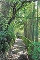 2014 Suchum, Ogród botaniczny (22).jpg