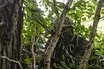 2015.9.10. 해병대 1사단-분대급 전장 리더십훈련 10th Sep. 2015. ROK 1st Marine Division - squad war leadership trainning (21598538235).jpg