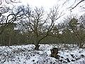 20170125 Wolfheze Wodanseiken 23b.jpg