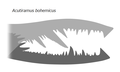 20201224 Acutiramus bohemicus cheliceral rami.png
