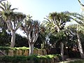 38400 Punta Brava, Santa Cruz de Tenerife, Spain - panoramio (12).jpg