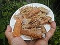4087Ants Common houseflies foods delicacies of Bulacan 09.jpg