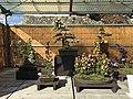 71st Nagoya Castle Chrysanthemum Exhibition 2018 09.jpg