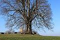 88410 Bad Wurzach, Germany - panoramio (11).jpg