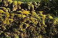 A Bit Of Moss (7982683572).jpg