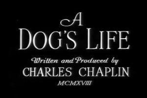 File:A Dog's Life (1918).webm