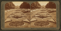 A beautiful garden avenue in Fairmount Park, Philadelphia, Pa, from Robert N. Dennis collection of stereoscopic views 2.png
