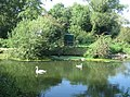 A family of swans - geograph.org.uk - 972130.jpg