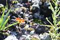 Abeja en flor dentro del Parque Ecológico de la Ciudad de México.jpg