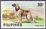 Afghan-Hound-Canis-lupus-familiaris Philippines 1979.jpg