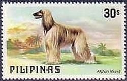 Afghan-Hound-Canis-lupus-familiaris Philippines 1979.jpg