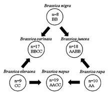 Ricostruzione dei legami genetici tra specie diverse