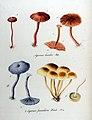 Agaricus fascicularis — Flora Batava — Volume v11.jpg