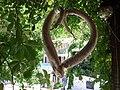Agios Nikitas 310 80, Greece - panoramio (1).jpg