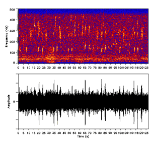 Bioacoustics - Spectrogram (above) and oscillogram (below) of the humpback whale's calls