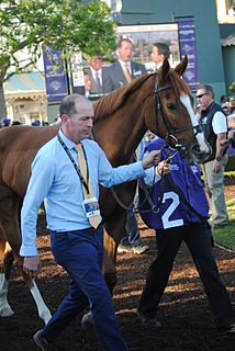 Alice Springs (horse) Irish-bred Thoroughbred racehorse