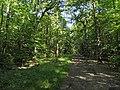 Allée du Camp de Jules César (forêt de Montmorency) - panoramio.jpg