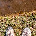 Alpine wet grassland (pozzine), Corsica.jpg