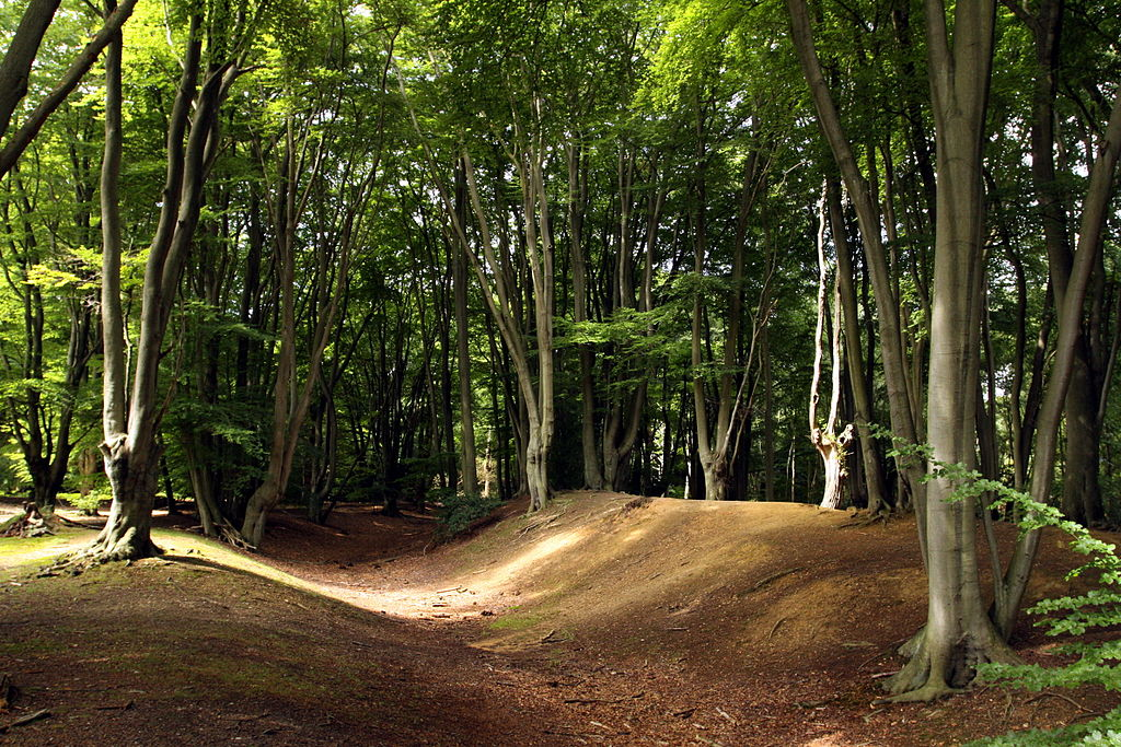 File ambresburg banks in epping forrest in london august for Rainforest londra