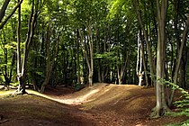 Ambresburg Banks in Epping Forrest in London, August 2013 (1).JPG