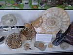 Ammonites for sale at the Albert Dock, Liverpool - 2013-06-07 (5).jpg