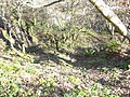 Ancient woodland at Lower Glynrhonwy Quarry - geograph.org.uk - 334329.jpg