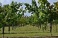 Angera - Rocca Borromea 0463.JPG