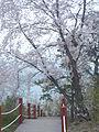 Ansan Lake Park (spring 2013) 067.JPG