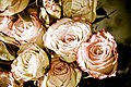 Antique Roses (3840005398).jpg