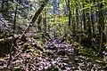 Aokigara forest near wind cave 05.jpg