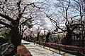 Aoyama Cemetery3.jpg