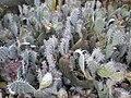 Arizona Cactus Garden 032.JPG