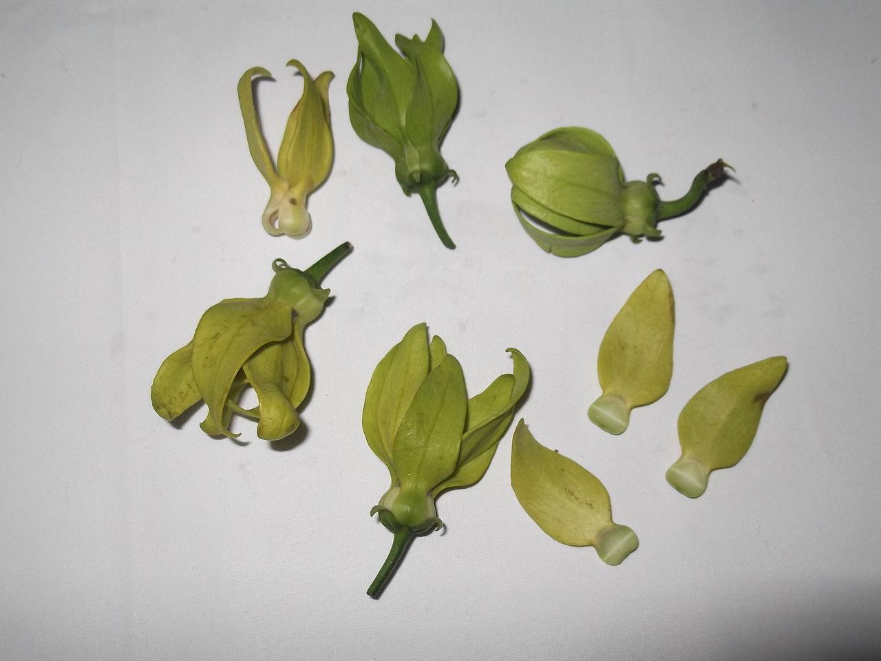 Yercaud India  city pictures gallery : ... hexapetalus flowers yercaud salem India Wikimedia Commons