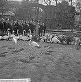 Artis 125 jaar dierentuin Flamingos, Bestanddeelnr 915-1166.jpg