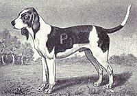 Artois from 1915.JPG