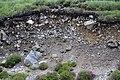 Aufgeschlossene Moräne auf Harris, nahe Seilebost II.jpg
