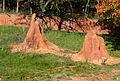 Australian Farm, Zoo Jihlava, termitary.jpg