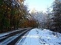 Autumn Snow (2985261108).jpg