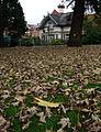 Autumn leaves, Drumglass Park - geograph.org.uk - 1555028.jpg