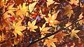 Autumn orange - panoramio (2).jpg
