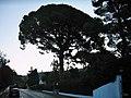 Av. de Vallauris, Cannes - panoramio.jpg