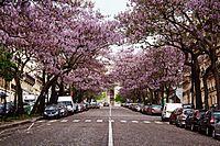 Avenue Carnot, Paris 14 May 2010.jpg