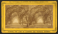 Avenue in Bonaventure, near Savannah, Georgia, from Robert N. Dennis collection of stereoscopic views 8.png