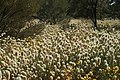 Ayers Rock Surrounding Flora- PR.jpg
