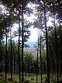 Bükkös - panoramio.jpg