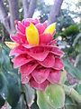 BCBG Flowers 14.jpg