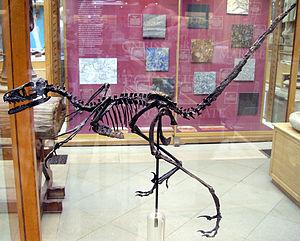 2000 in paleontology - Bambiraptor